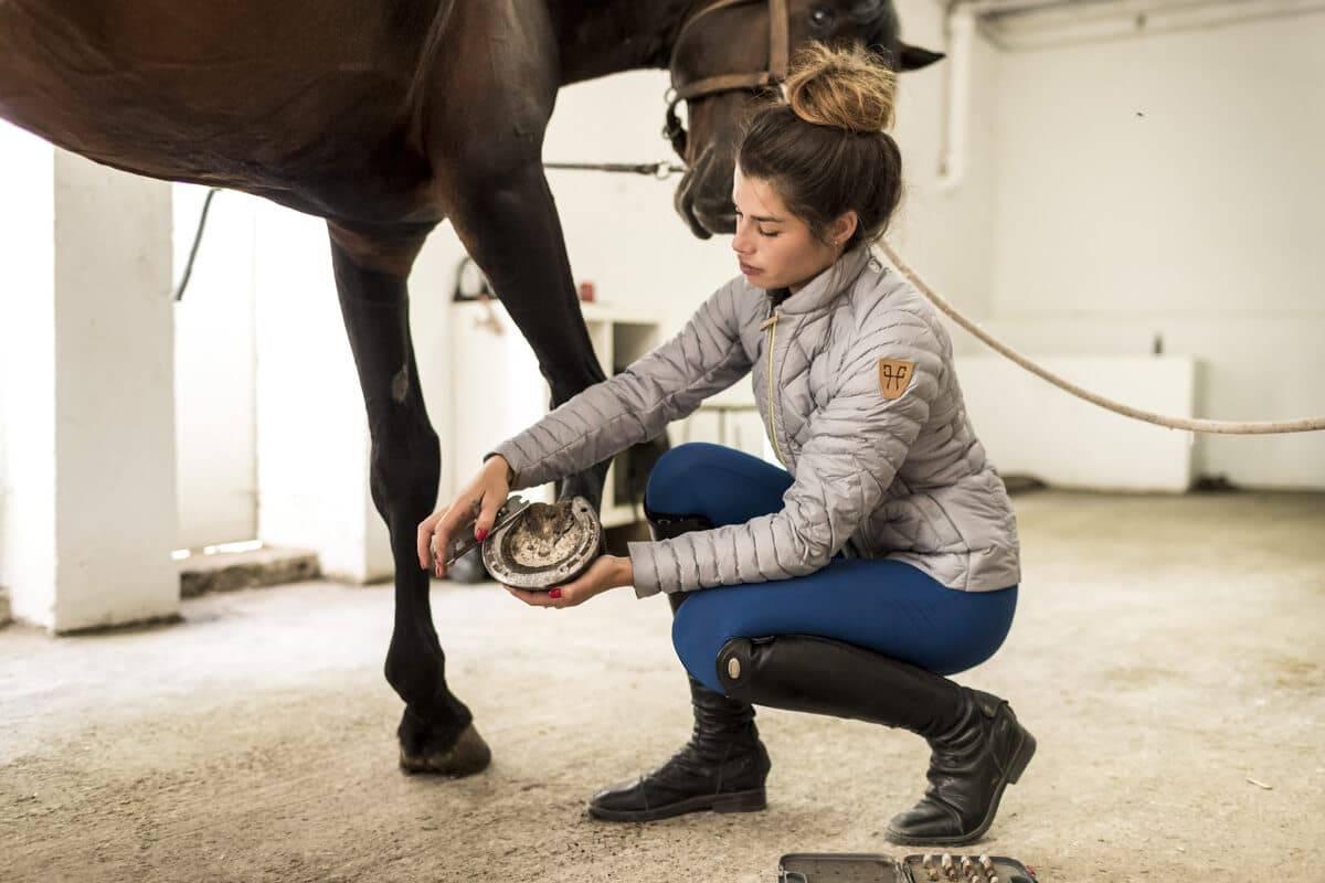 Préparation du cheval et l'échauffement du cavalier